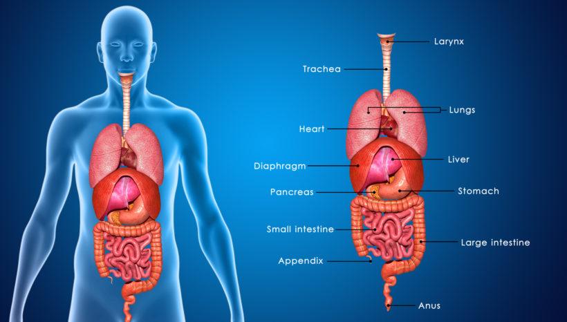 Understanding Digestion (Part One)