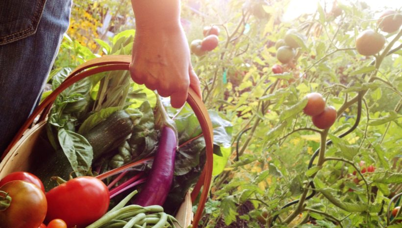 The Importance of Eating Locally and In Season