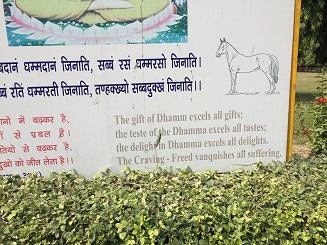 Sarnath 7