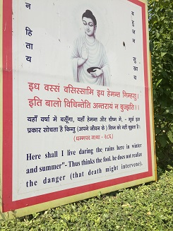 Sarnath 8